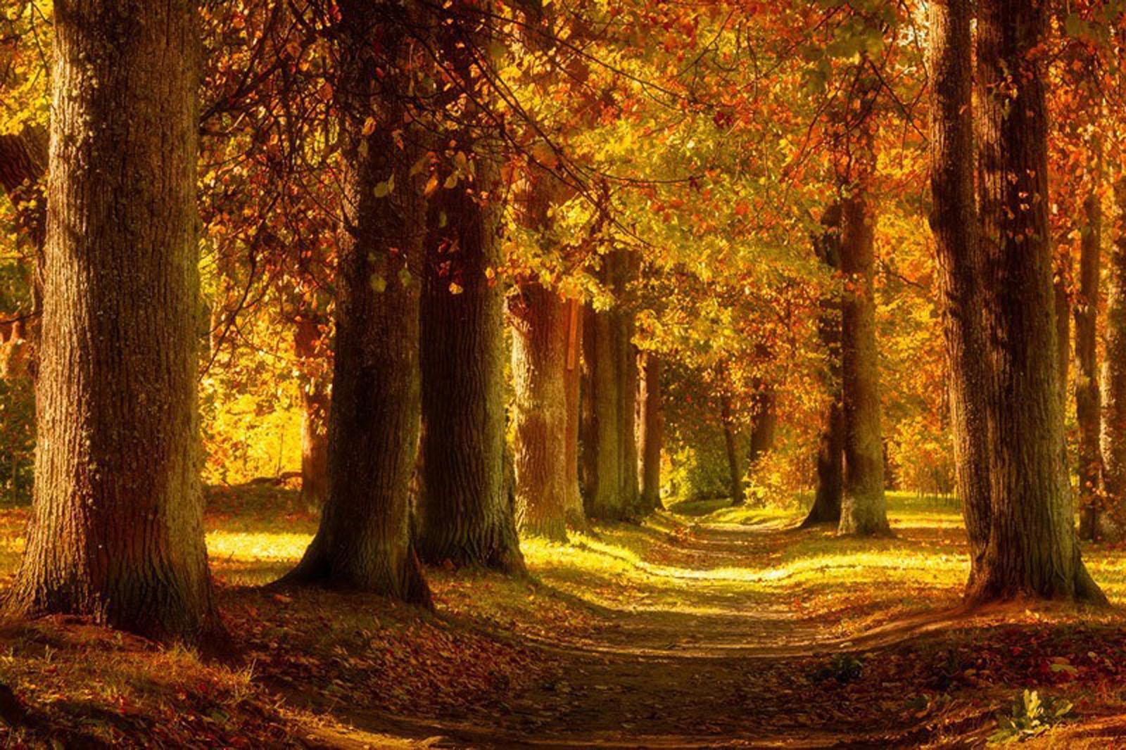 Autumn Alley Image