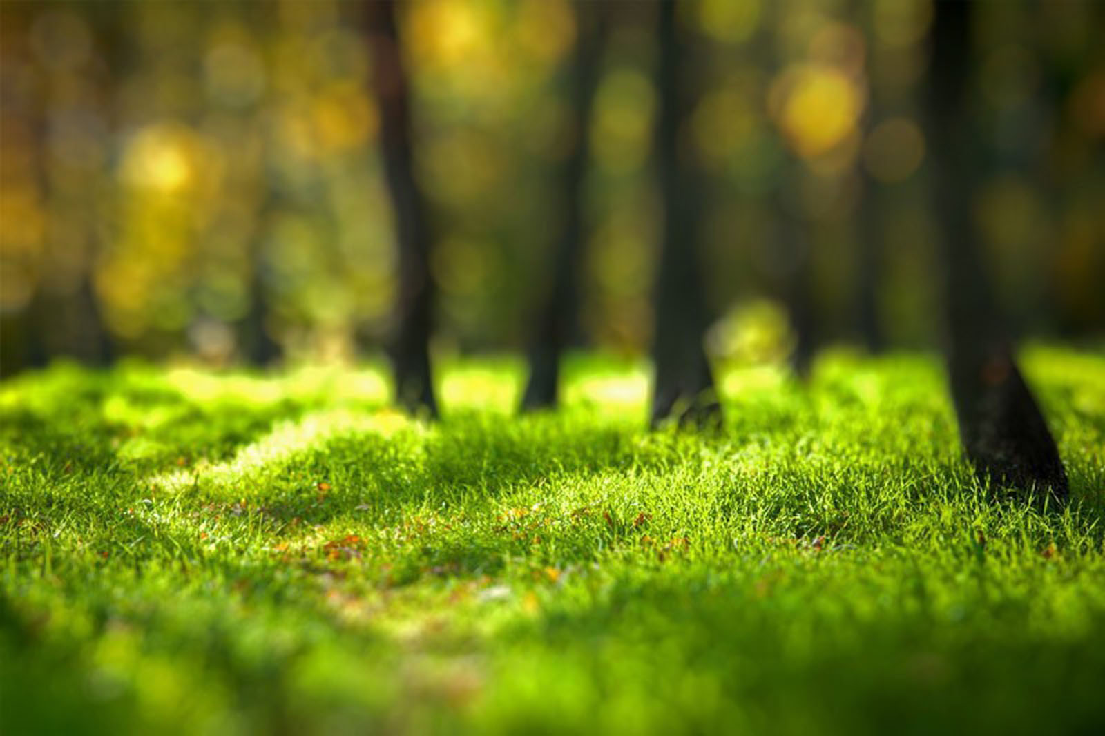 Beautiful Forest Background Image