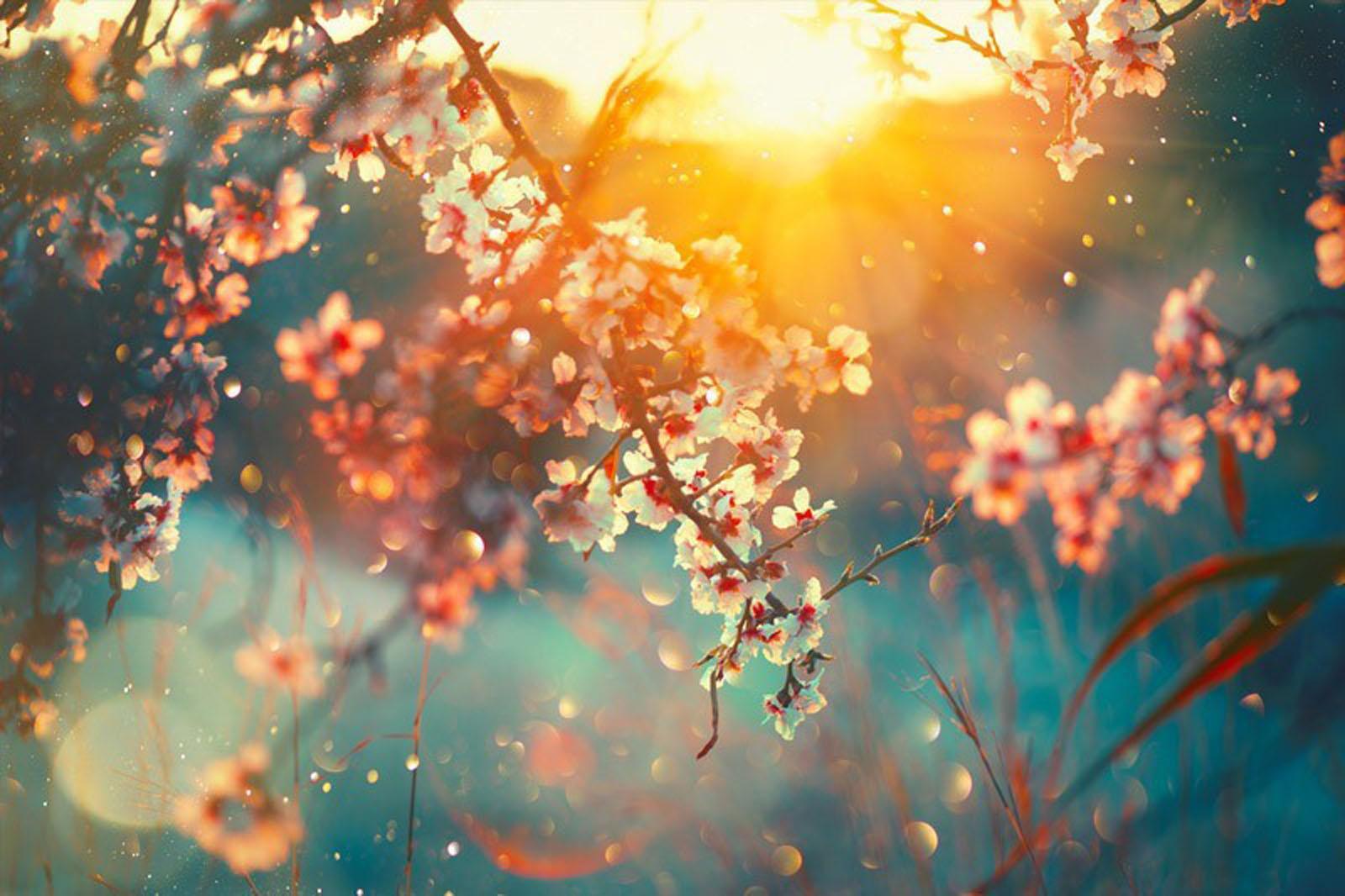 Spring Blossom Image